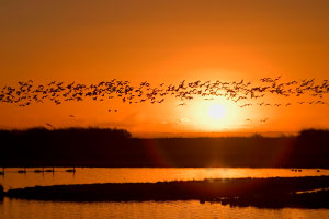 Welney Wildfowl and Wetland Trust sunset